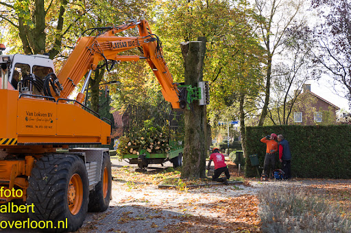 Bomen gekapt Museumlaan in overloon 20-10-2014 (23).jpg