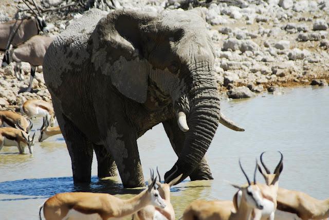 أفضل ما في أفريقيا  Best of Africa Namibia_180807114848