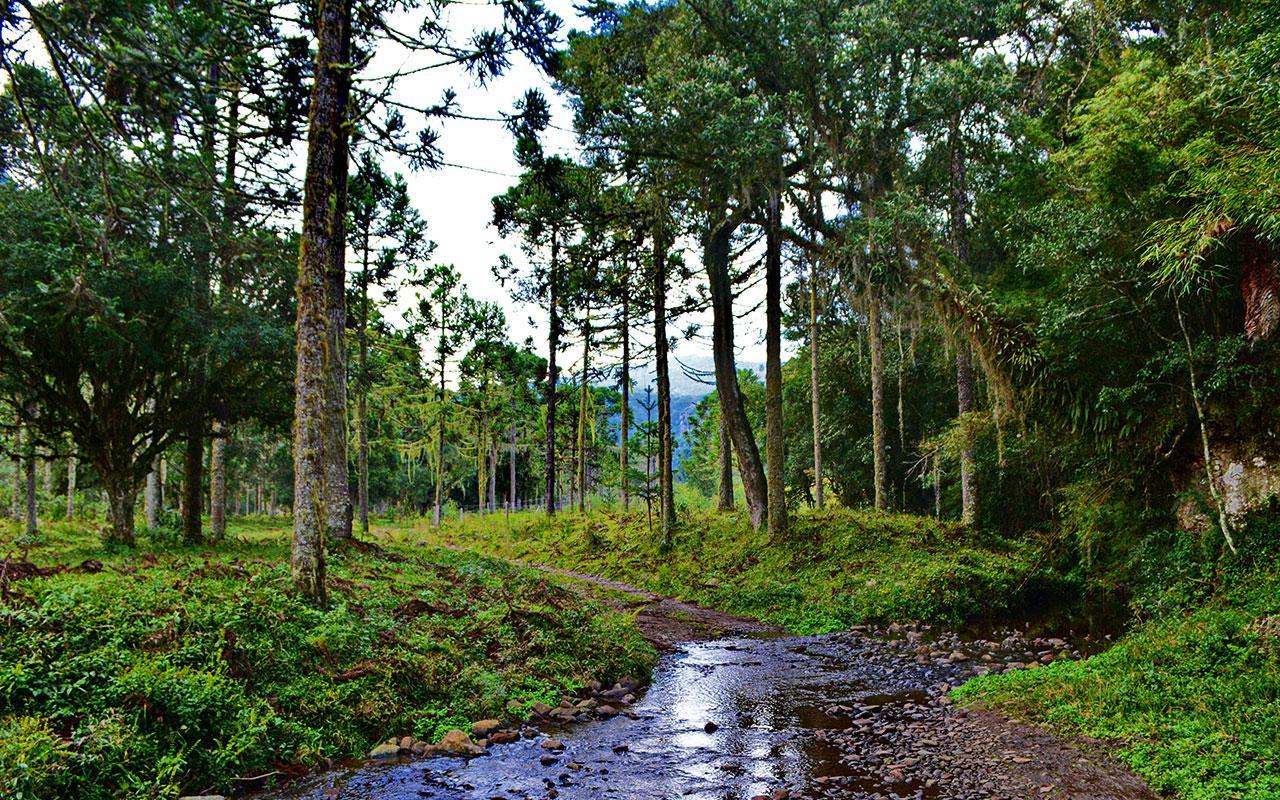 As belezas e riquezas da Floresta com Araucária - Instituto Purunã | Desenvolvimento do turismo sustentável