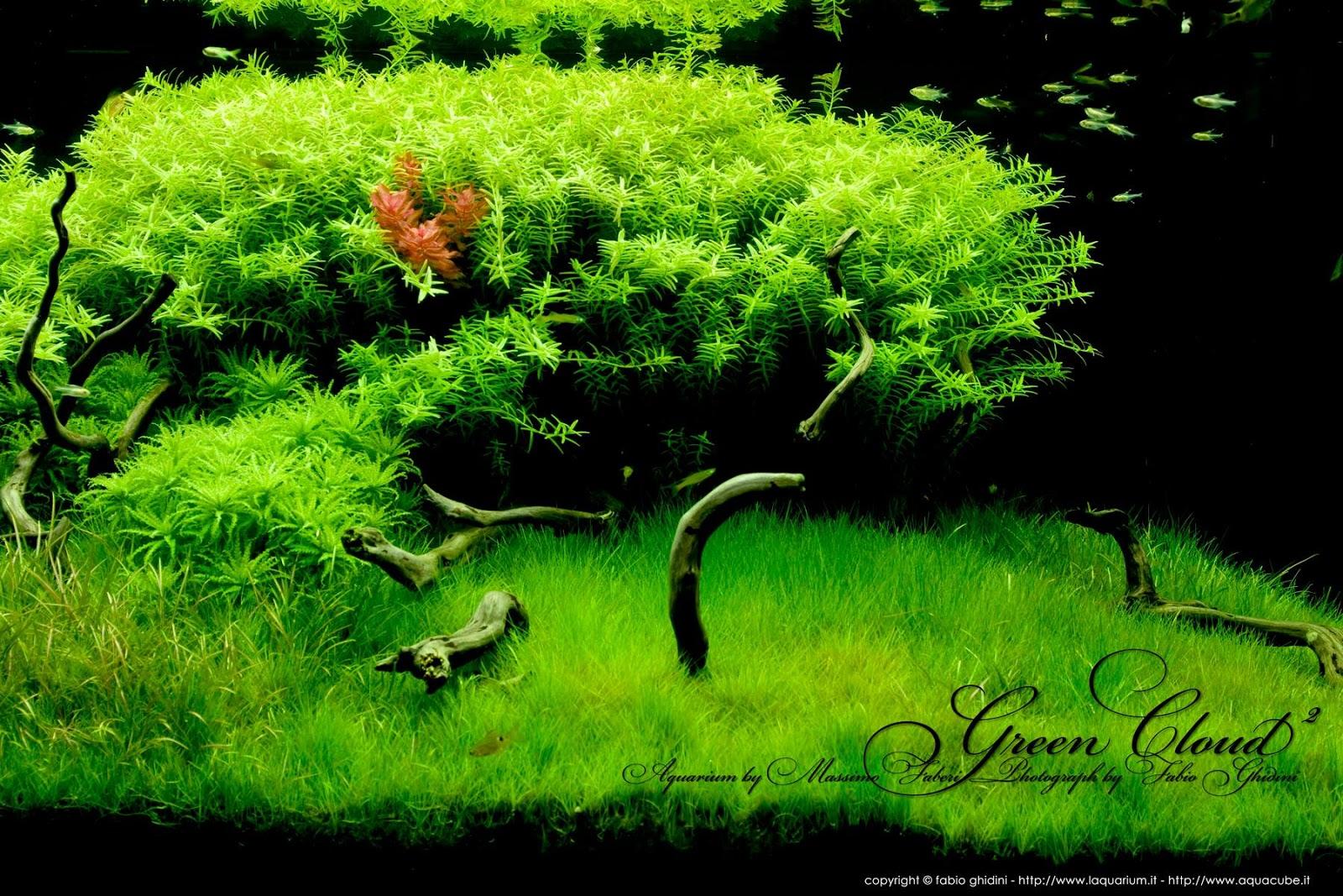 Tham khảo các loại cây thủy sinh hậu cảnh khác