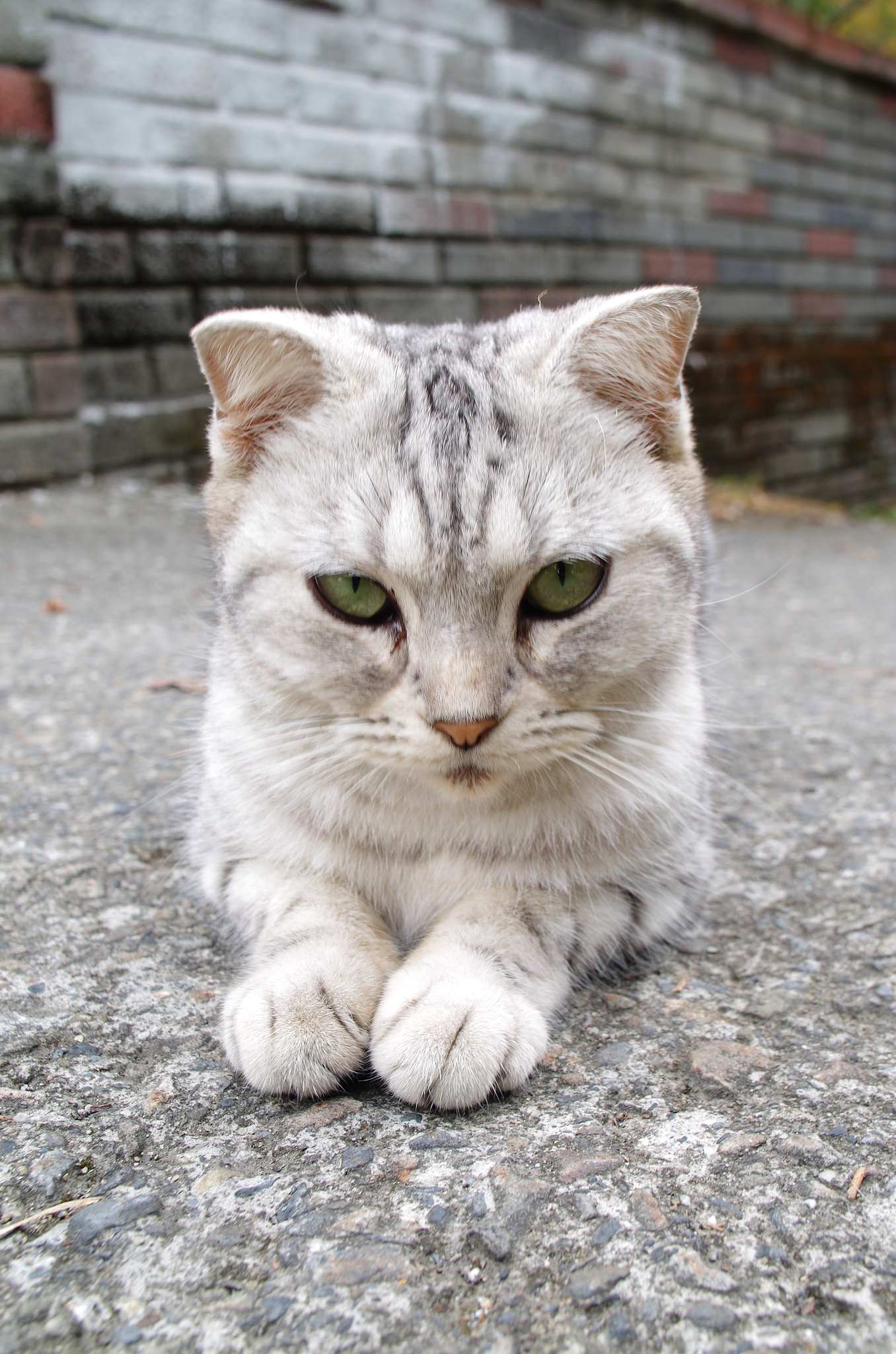 路上一隻貓