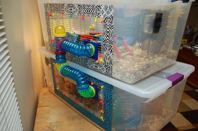 Critter corner hamster bin cages for Hamster bin cage tutorial