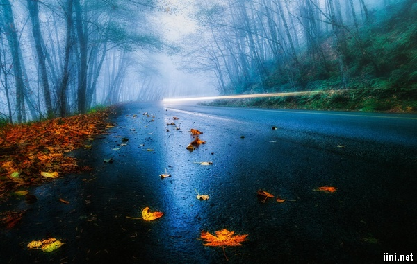 ảnh xác lá rụng rơi trên con đường mùa thu