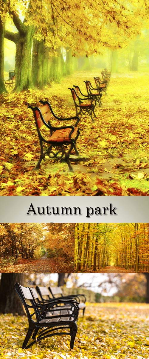 Stock Photo: Autumn park and the alley in fallen leaves