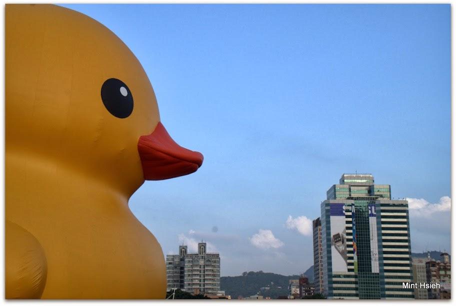 黃色小鴨(圖11枚)