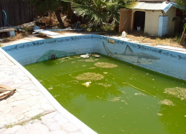 Dirty Swimming Pool Algae