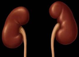 penyakit ginjal Naturally Plus: Pentingnya ALBUMIN Bagi Tubuh Kita
