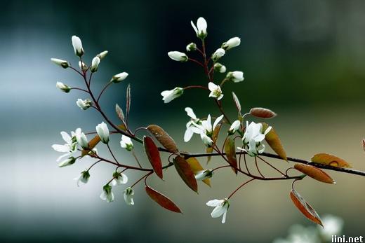 ảnh hoa mùa xuân
