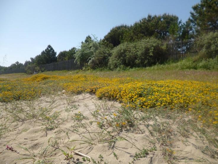 Spiaggia a maggio