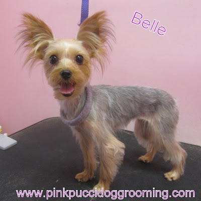 Belle The Yorkshire Terrier Pink Pucci