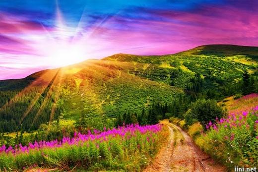 ảnh mặt trời chiếu rọi xuống cánh đồng hoa