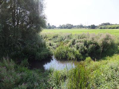 The River Alde