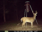 Louisiana Deer Hunting Property Bayou Sloughs Swamps Forest