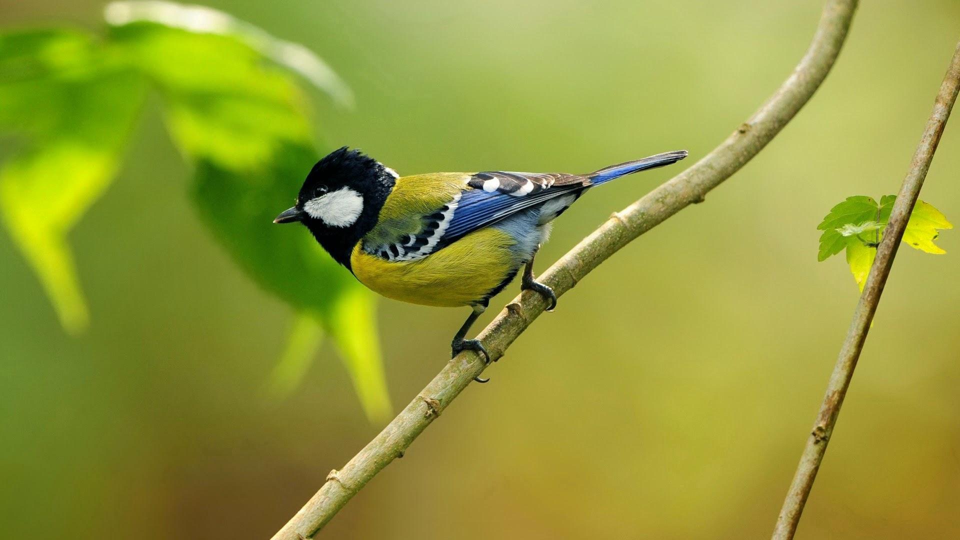 خلفيات طيور HD - صور طيور جميلة - خلفيات طيور نقية لسطح المكتب 2013