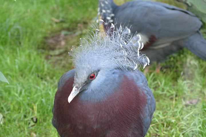 In Ebbs leben schrille Vögel