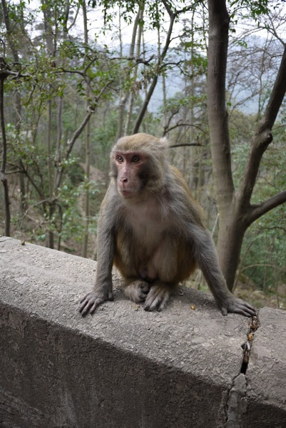 Monkey sitting on a ledge