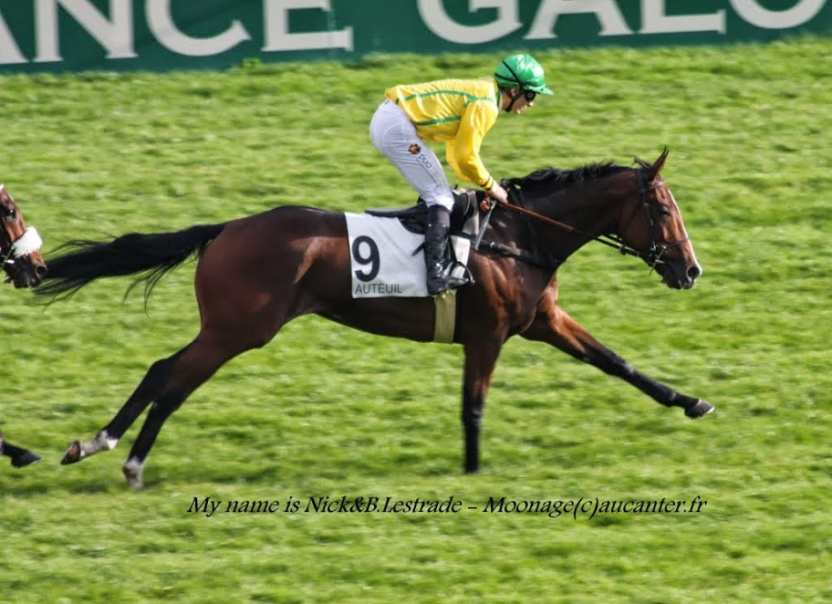 Photos Auteuil 2-11-2014 (48h de l'obstacle) IMG_5464
