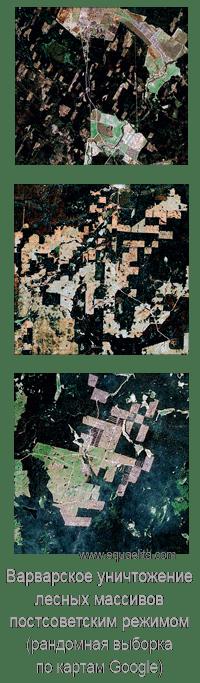 Уничтожение лесов в Российской Федерации