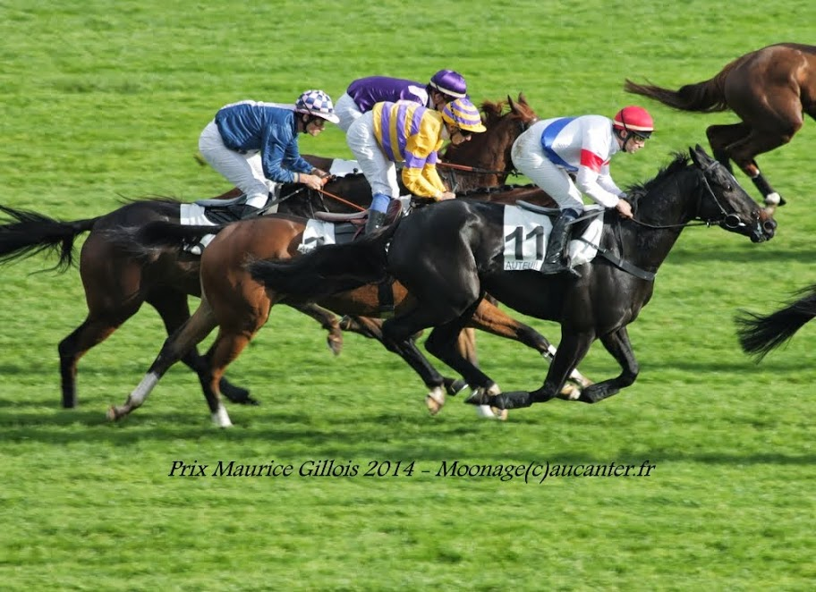 Photos Auteuil 2-11-2014 (48h de l'obstacle) IMG_5462