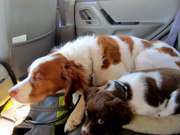 Torrey and Boulder in the back seat after fueling up in Price