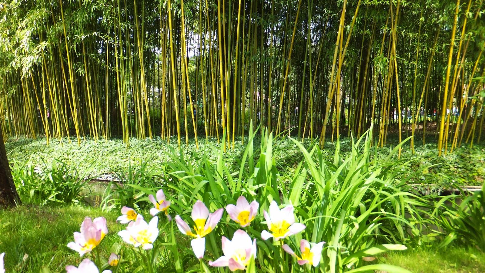 Casa y Jardines de Claude Monet, Giverny, Francia, Elisa N, Blog de Viajes