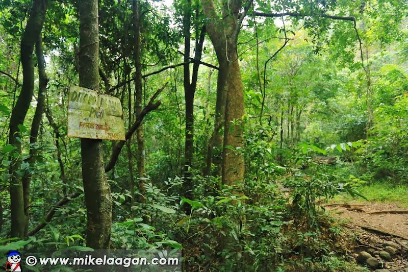 Pico de Loro Signages