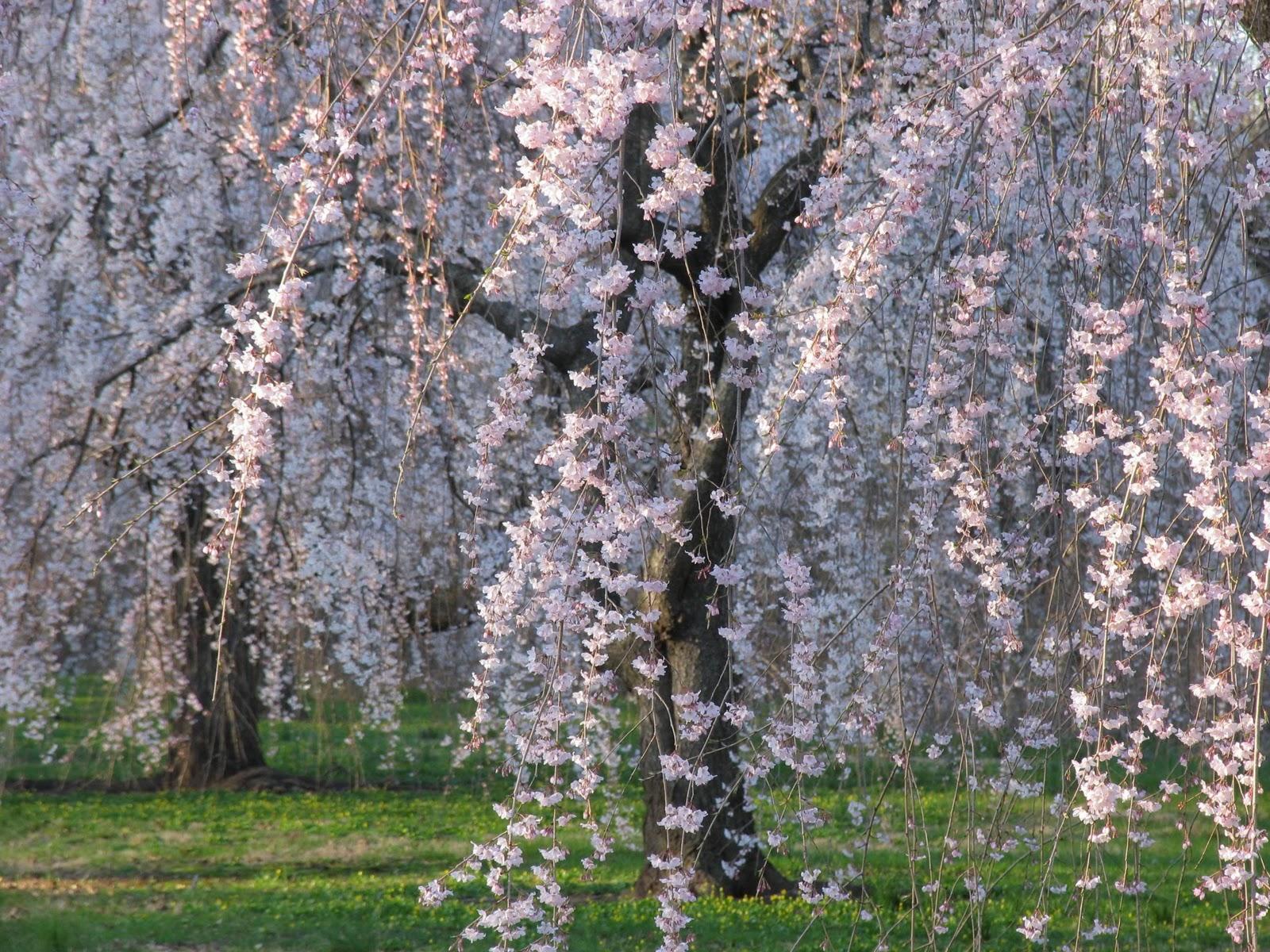 four seasons of my soul  poem from the kokinshu by tsurayuki