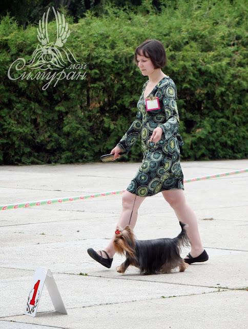 18-19 июня 2011г. Беларусь (2хСАС) - Смоленск CACIB (фотоотчёт) 42