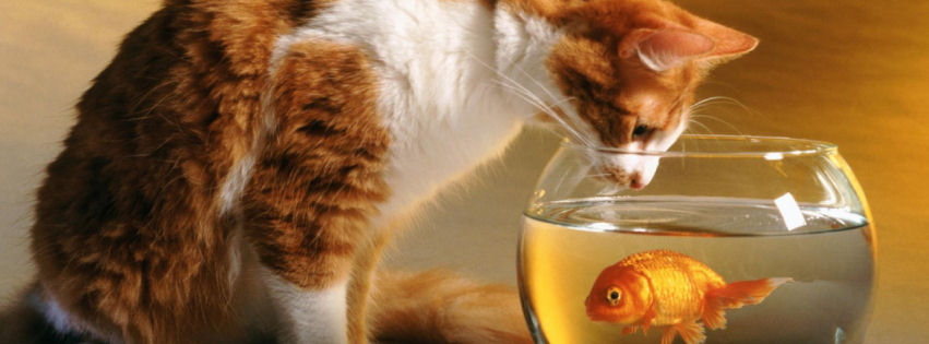 Cat and fish facebook cover