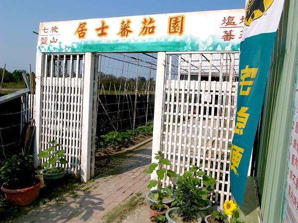 【到處玩】台南市_七股區_居士番茄園