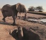 إنقاذ صغير الفيل