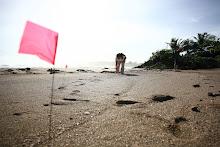 Un grupo de voluntarios hace un recorrido costero por las playas de La Hacienda Buena Vista.
