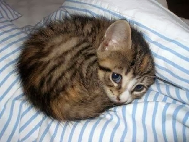 The cutest and the most innocent kitten in the whole world.