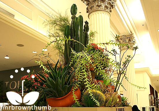 Cactus & Succulent Garden Macy's Flower Show
