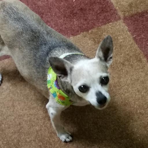 Susan Gaul Photo 1
