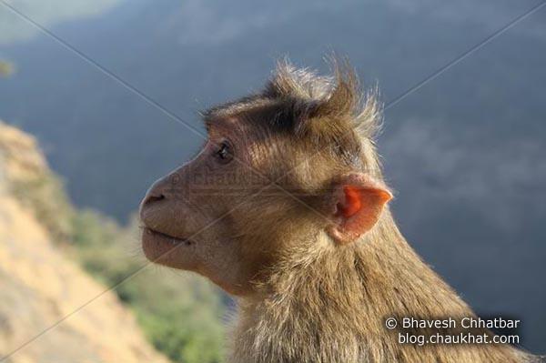 Clean Monkey