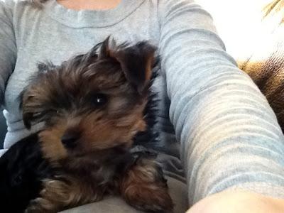 Koncentrationsbesvær eller hvordan en hund stjal mit hjerte