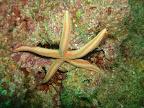 Los Arcos scuba diving