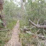 Track along creek south of Bittangabee (106891)