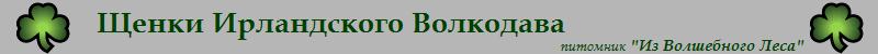 Щенки Ирландского волкодава