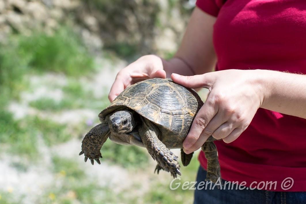Kazdağlarında yolumuza çıkan bir kaplumbağa