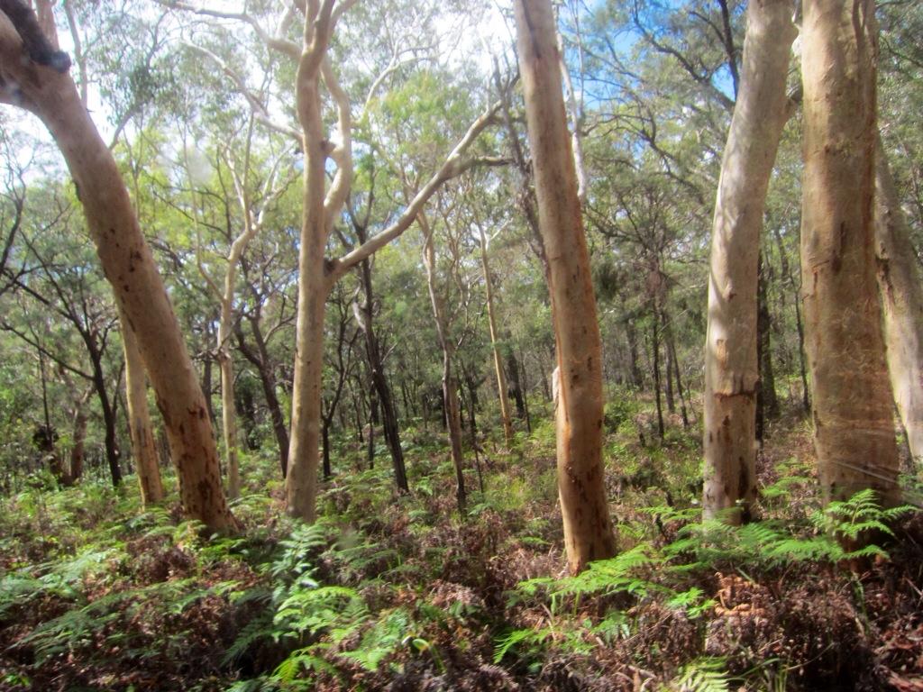 Lorna's Travel Blog: Fraser Island