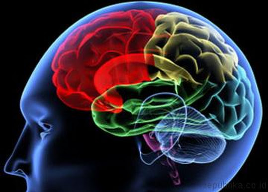 otak kepala1 Suplemen Herbal Untuk Nutrisi Otak