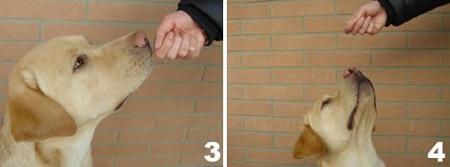 Insegnare al cane il comando SEDUTO - foto 2