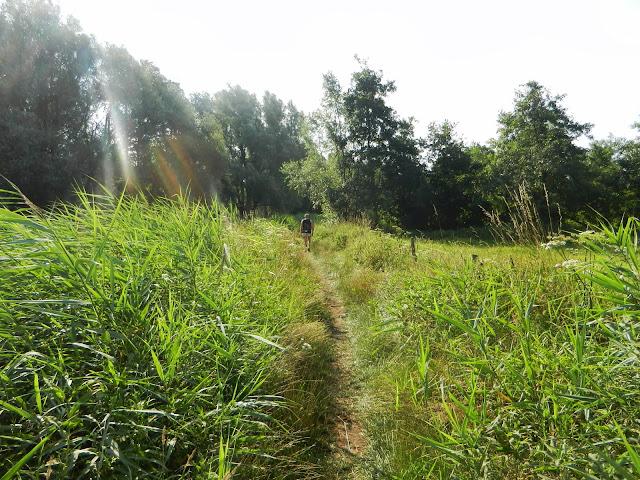 100/110km de la Campine (Kempenlandtocht; NL):1-2/8/2014 Geldrop%252C%25200203-08-13%2520156