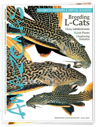 AMAZONAS freshwater aquarium magazine nº 1