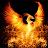 shai inbar avatar image