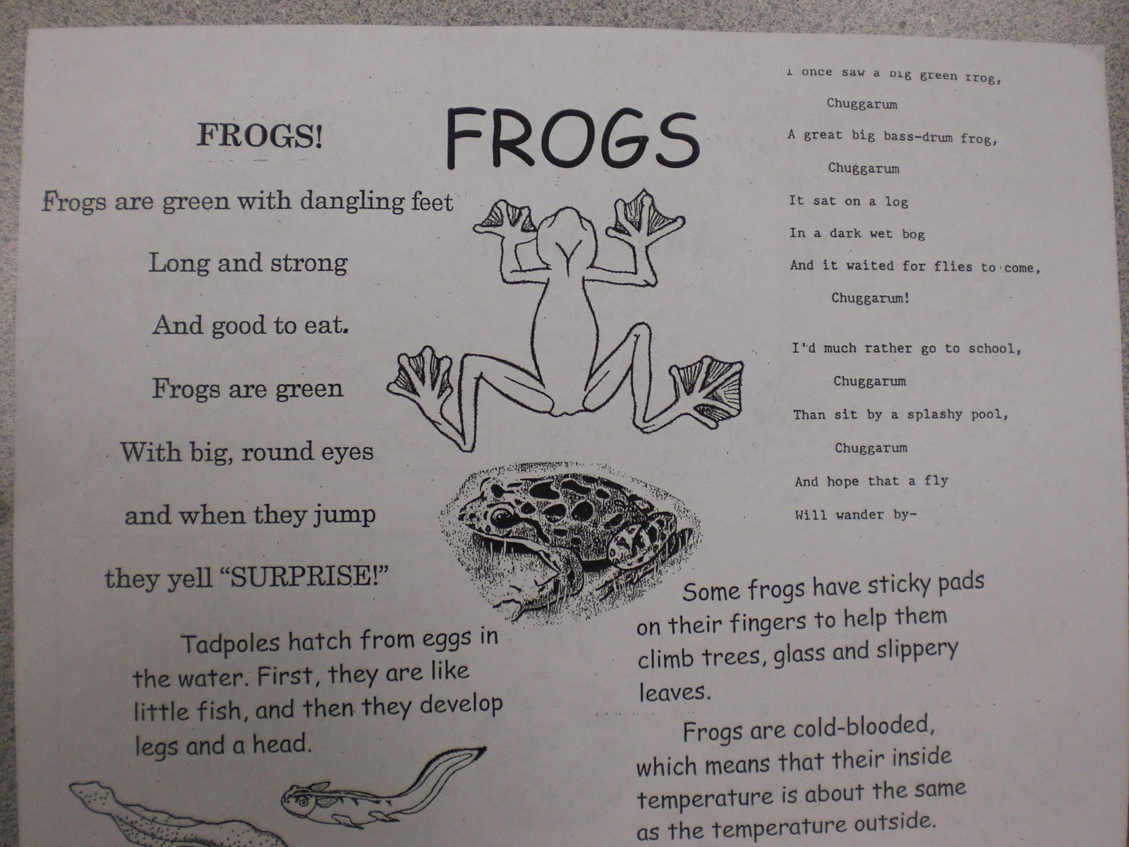 Patties classroom 5 little speckled frogs frog poems frog facts pooptronica Gallery