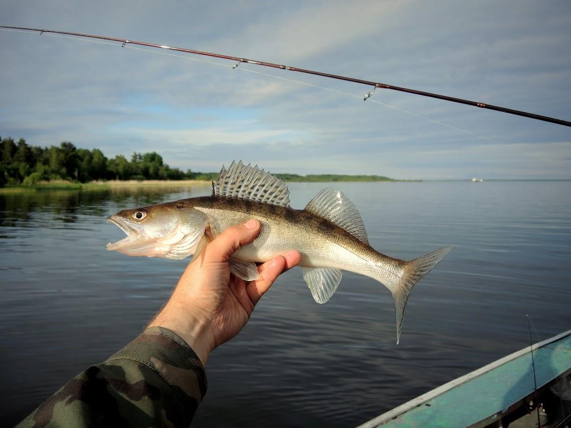 ловля на малых реках ленинградской области