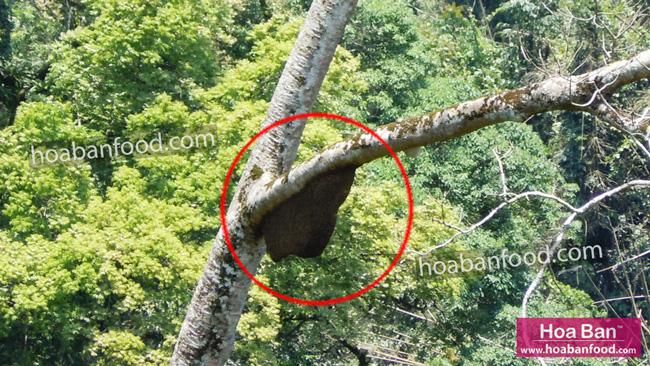 đi tìm mật ong rừng 04/2013 - 11